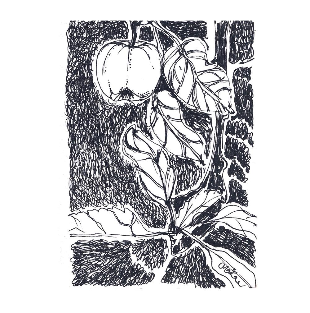 apple trees, sketchbook 2015